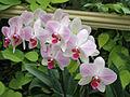 Orchid0004.jpg