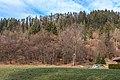 Pörtschach Winklern Quellweg Waldstück mit ehemaligem Kalkofen 20012020 8112.jpg