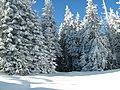 Pădurea iarna - panoramio - Cioboata Andrei.jpg