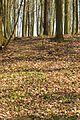 Přírodní památka Nad Blatinou 16.jpg