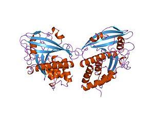Protein tyrosine phosphatase