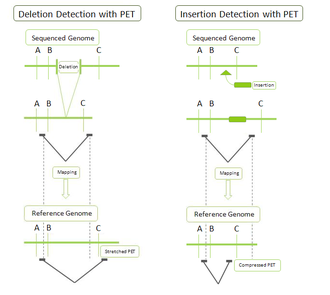 Paired-end tag - Example of PET detection of deletions and insertions.