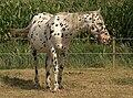 Paardinpoesele 14-08-2009 15-12-37.NEF.jpg