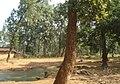 Paddy Fields & lush green forest around Gariaband.jpg