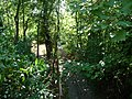 Paignton , Paignton Zoo Railway Track - geograph.org.uk - 1483115.jpg