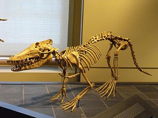 <i>Pakicetus</i> Genus of ancient whales