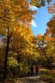 Parc Mt-Royal.jpg