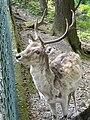 Parco della Villa Pallavicino - Stresa - DSC03077.JPG