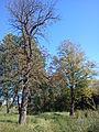 Park dworski Węgleńskich (2).jpg