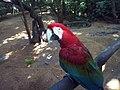 Parque das aves em Foz de Iguaçu.jpg