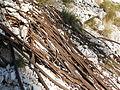 Particolare delle funi abbandonate della dismessa funivia della Paganella 2.jpg