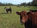 Pasture, Park Corner - geograph.org.uk - 754995.jpg