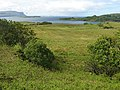 Pasture near Ulva Ferry - geograph.org.uk - 448844.jpg