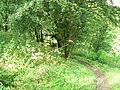 Path to Fenny Bentley - geograph.org.uk - 944409.jpg