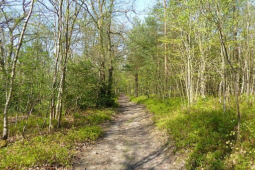 Pathway through the southern half of Oldbury Wood