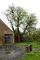 Perelaar in bloei op het domein Speelhoven te Aarschot - 373155 - onroerenderfgoed.jpg