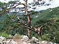 Pieniny - Sokolica (2) - panoramio.jpg