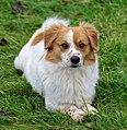 Pies nierasowy, 20201225 1128 5279.jpg
