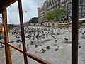Pigeons near Gateway of India, Mumbai, India.jpg