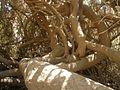 PikiWiki Israel 15820 Cony.jpg