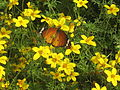 PikiWiki Israel 20069 Wildlife and Plants of Israel.jpg
