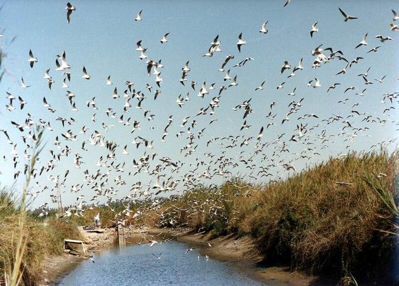 ציפורים מעל המים