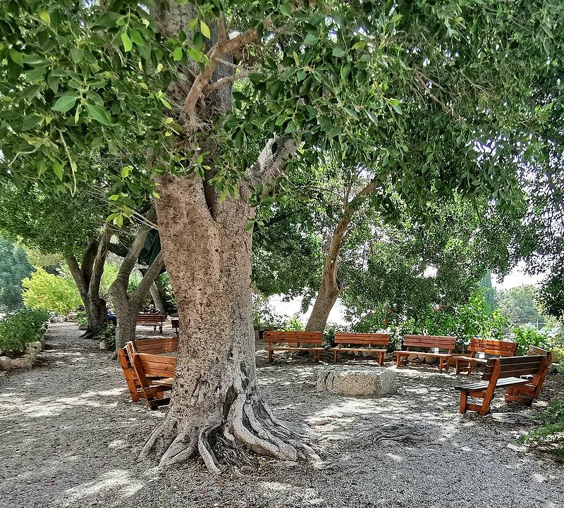 במתחם מנזר דיר ראפאת