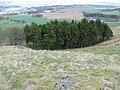 Pines, Cockleroy - geograph.org.uk - 157863.jpg