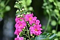 Plant of Thailand - 2.jpg