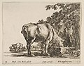 Plate 12- a cow drinking from a stone trough, other cows to left in background, from 'Diversi capricci' MET DP817413.jpg