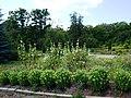 Poltava Botanical Garden (168).jpg