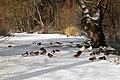 Pondside Snow IMG 9005 - panoramio.jpg