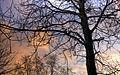 Poplar in Winter (4326069640).jpg