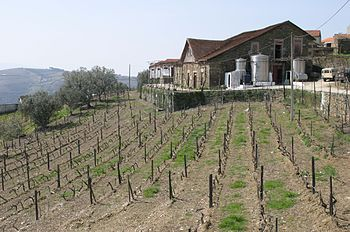 A view of a vineyard just before the spring cy...
