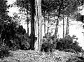 Pot à résine, Forêt de Cageaux, Arcachon, septembre 1890 (5412355961).jpg