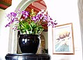Pot of orchids.jpg