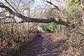 Public bridleway descending Hailes Wood - geograph.org.uk - 1292816.jpg