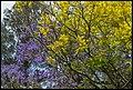 Purple Yellow Blue at Grafton-3 (22480920970).jpg