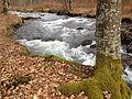 Râul Tur la origini.jpeg