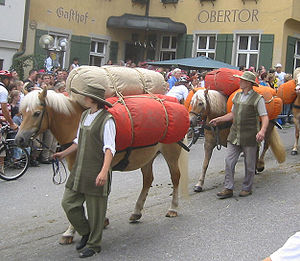 Haflinger - Haflingers used as pack horses during a medieval re-enactment