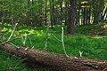 Ravine Forest (3) (15171352281).jpg