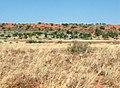 Red dune, yellow ochre flat - panoramio.jpg