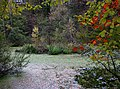 Rehsprungmaar im Herbst.jpg