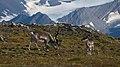 Reindeer 20130730 165615.jpg