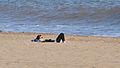 Relax (3409897731).jpg