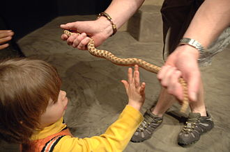 Reptilia (zoo) - Live reptiles are used in hands-on teaching.