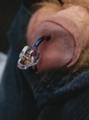 Reverse Prince Albert Swarovski Skull.png