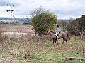 Rider on Stockbridge Down - geograph.org.uk - 347062.jpg