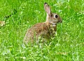 Riehler Heimstätten - Kaninchen 01.jpg