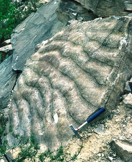 Ripple marks formed by a current in a sandstone that was later tilted (Hassberge, Bavaria) Rippelmarken Hassberge ReiKi.jpg